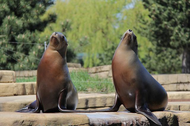 zoo kopenhamn1