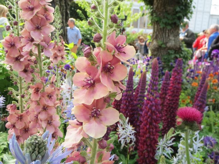 London2015-Chelsea-flowershow-tradgard3