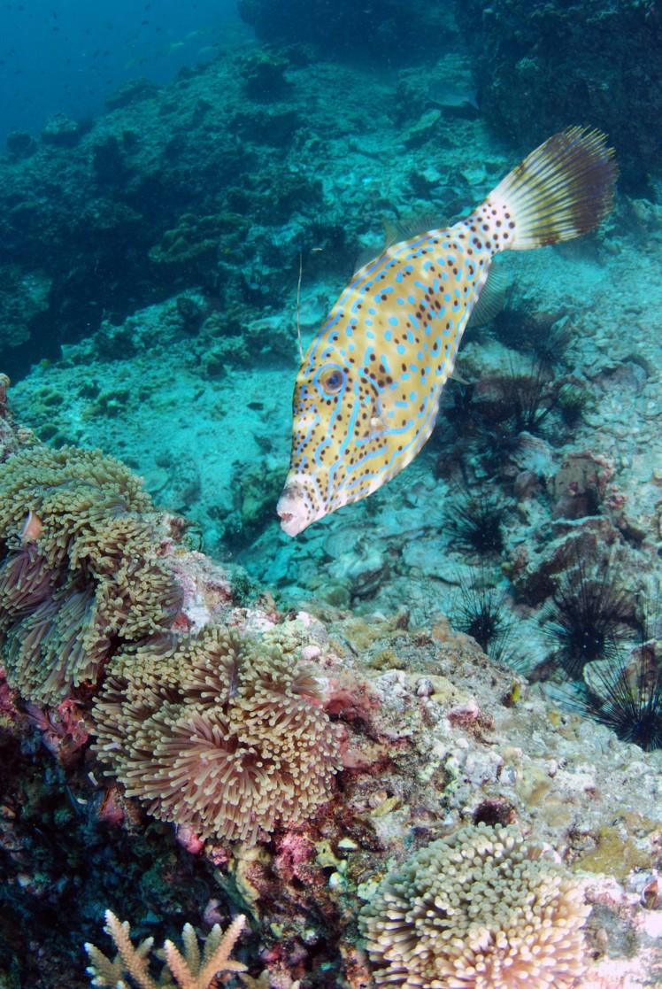 Thailand2016-dykning-BidaIslands-fisk11
