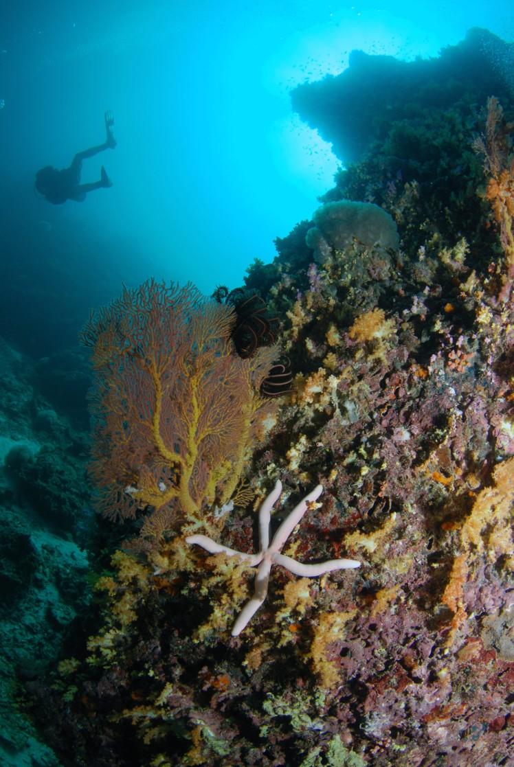 Thailand2016-dykning-BidaIslands-fisk2
