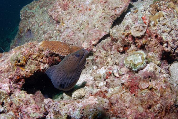 Thailand2016-dykning-BidaIslands-fisk4