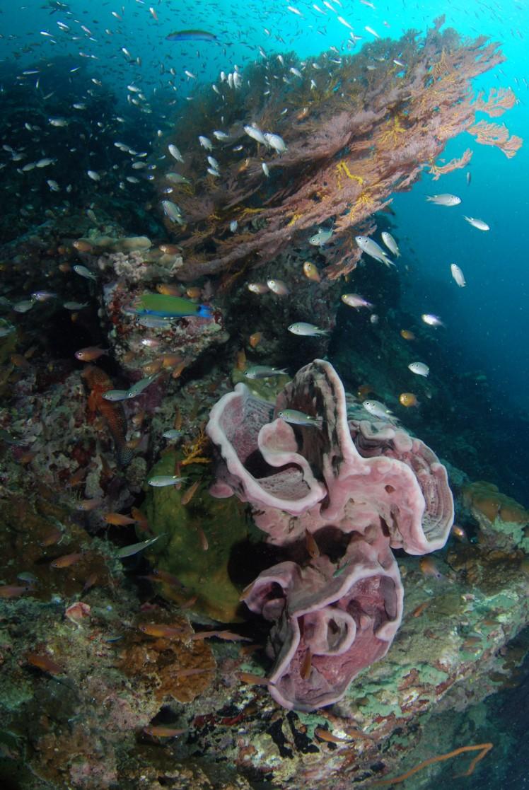 Thailand2016-dykning-BidaIslands-fisk5