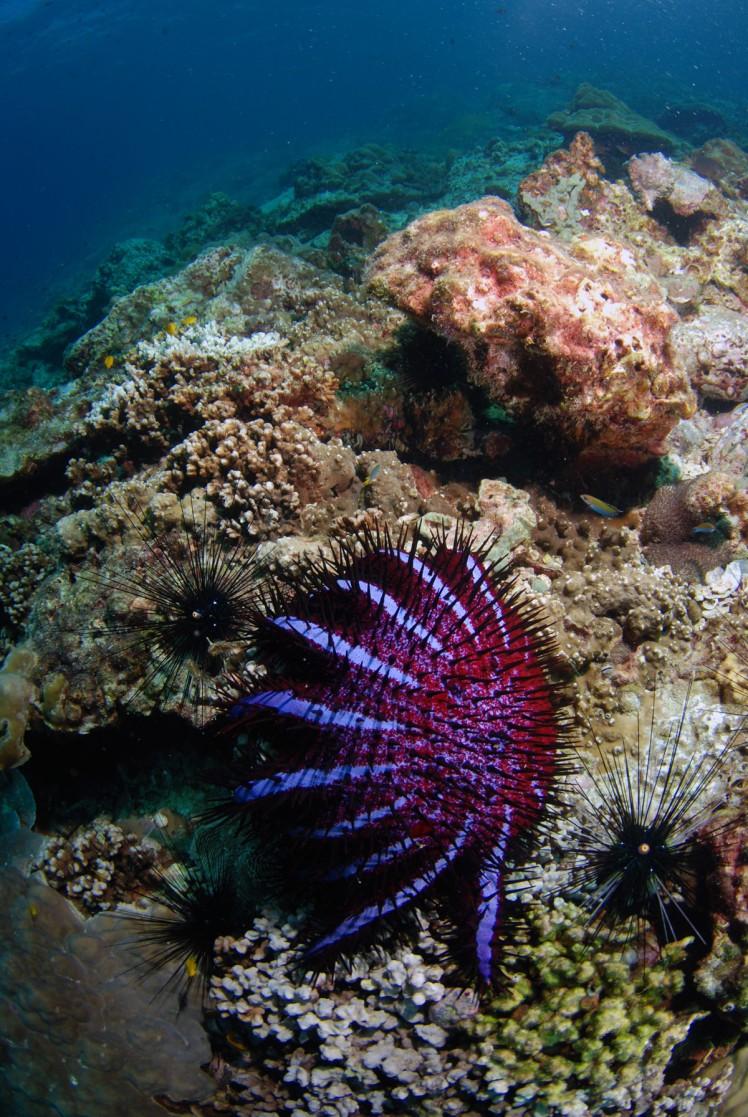 Thailand2016-dykning-BidaIslands-fisk6