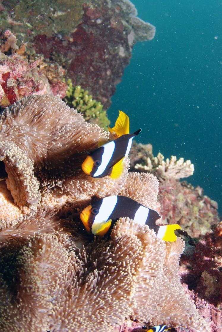 Thailand2016-dykning-BidaIslands-fisk7