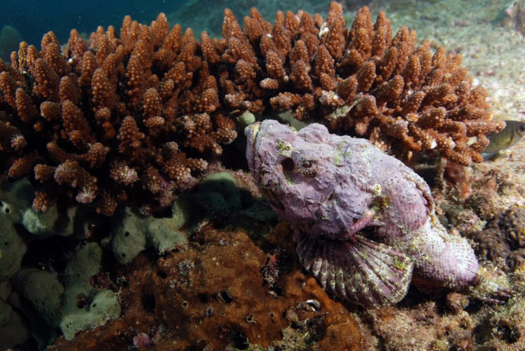 Thailand2016-dykning-BidaIslands-fisk9