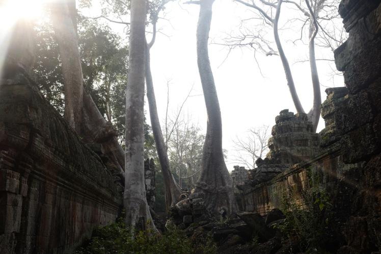 angkor-taprohm4