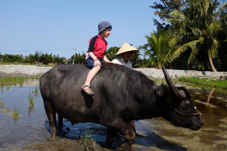 hoian-buffel