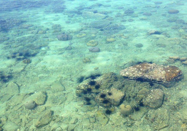whale-island-koraller-sjoborr