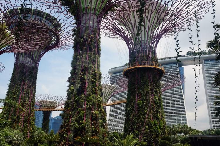 Singapore_Gardens-trad-5