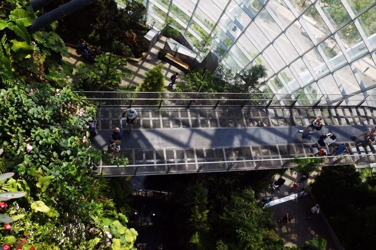 Singapore_Gardens_cloudforrest-5