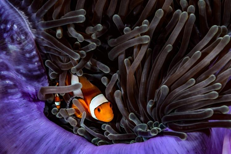 bida-dykning1