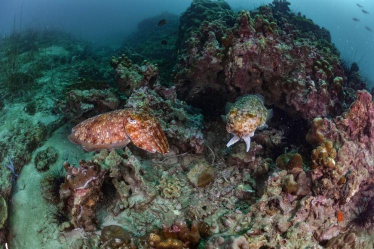 bida-dykning2