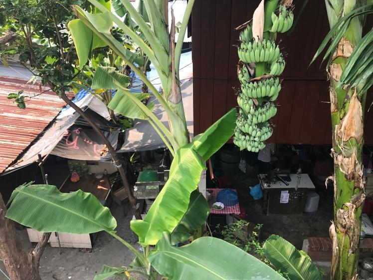 bangkok-gron-vag5