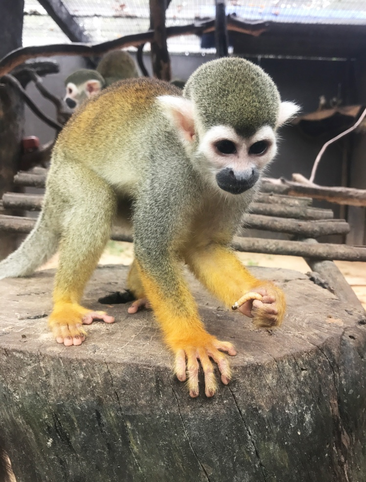 PhuQuoc2018-zoo12-apa