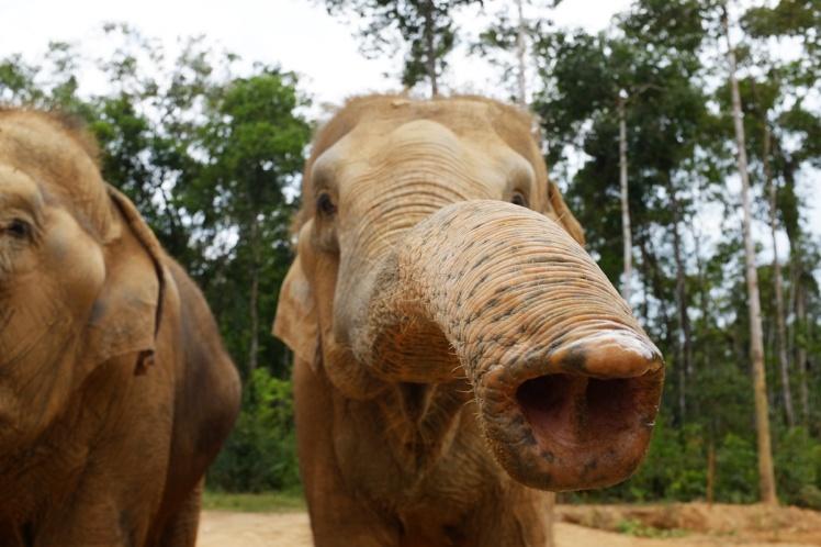 PhuQuoc2018-zoo7-elefant