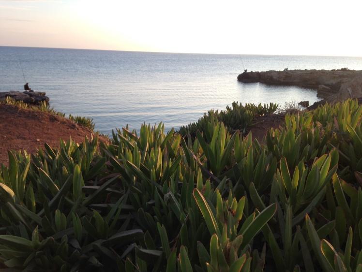cypern2016-figtreebay-viken5