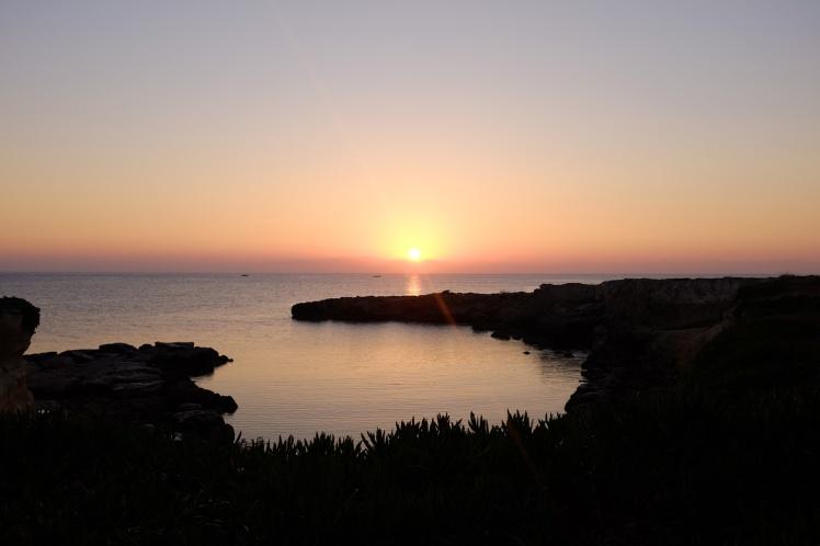 cypern2016-figtreebay-viken6