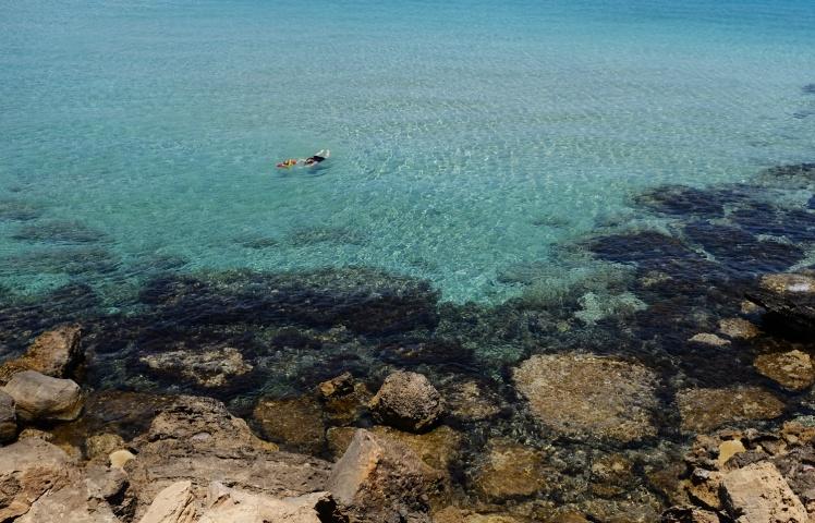 cypern2016-figtreebay3.jpg