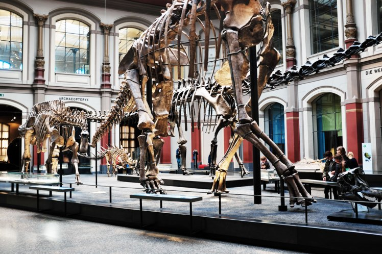 Berlin-Naturkunde-museum-dinosaurie-red