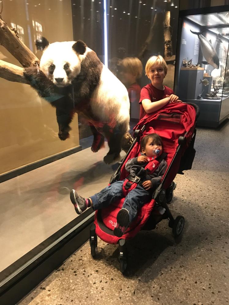 Berlin-Naturkunde-museum-panda2