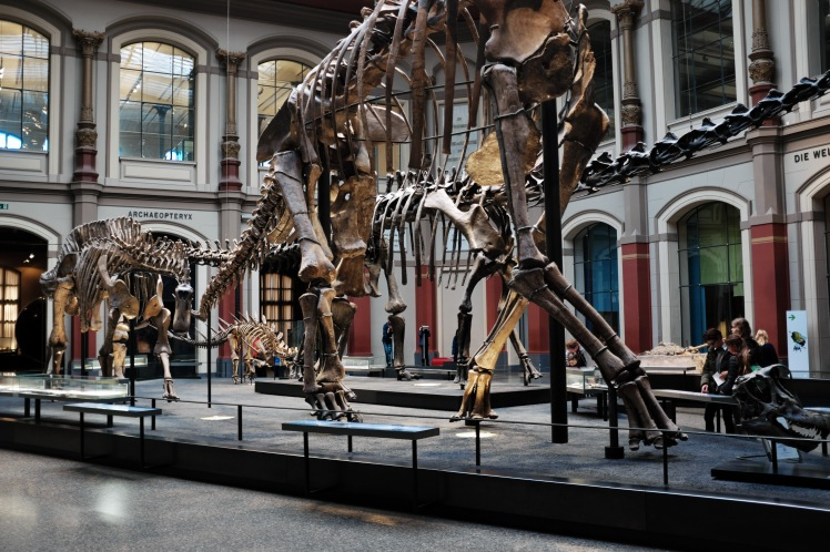 Berlin-Naturkunde-museum-dinosaurie-1