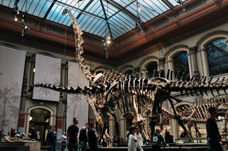 Berlin-Naturkunde-museum-dinosaurie-2
