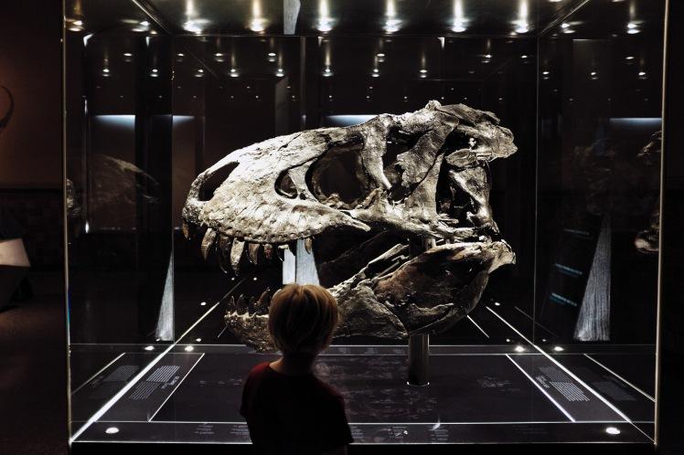 Berlin-Naturkunde-museum-dinosaurie-3