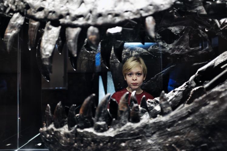 Berlin-Naturkunde-museum-dinosaurie-4