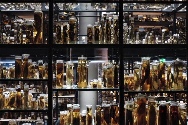 Berlin-Naturkunde-museum-glasburkar-1