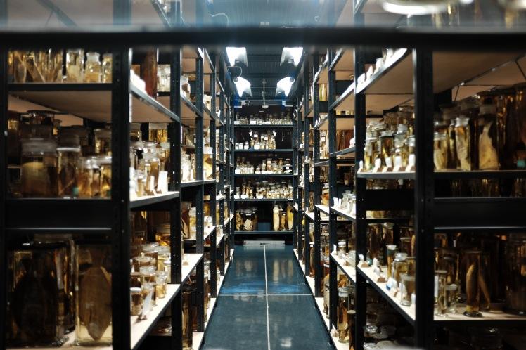 Berlin-Naturkunde-museum-glasburkar-2