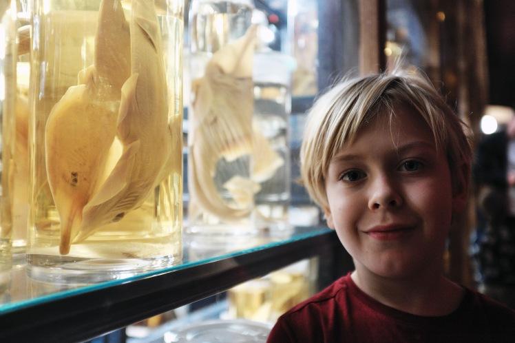 Berlin-Naturkunde-museum-glasburkar-4
