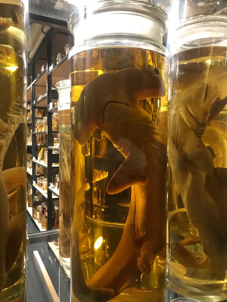 Berlin-Naturkunde-museum-glasburkar-5