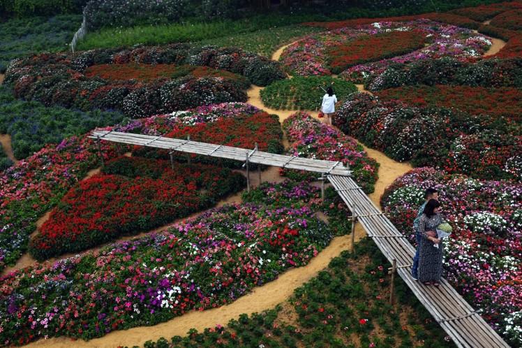 Hanoi-blomsterpark-2