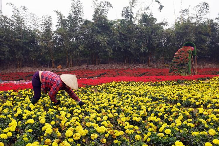 Hanoi-blomsterpark-5